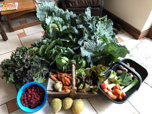 Allotments Produce